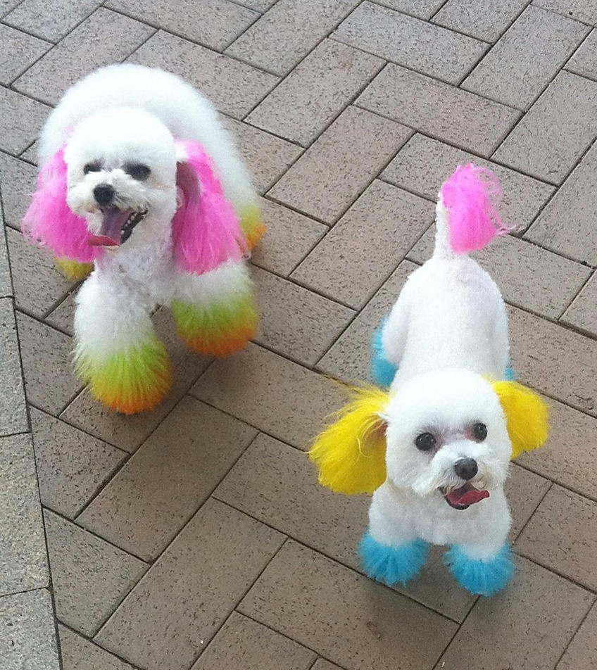 Hong Kong Fad Of Dyeing Dogs Fur Could Prove Fatal