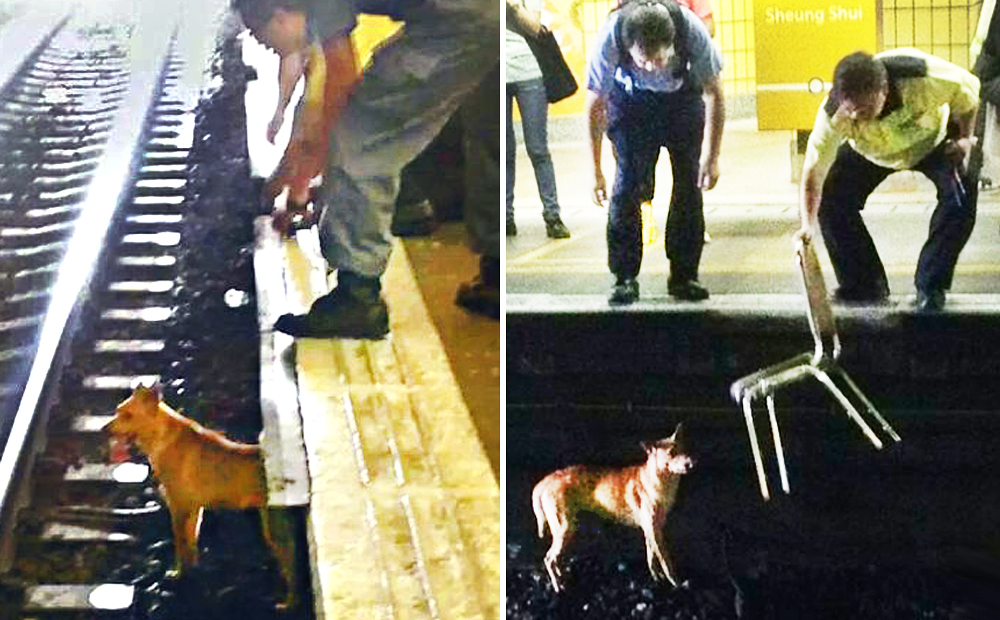 Fury after dog killed on MTR tracks because rail bosses