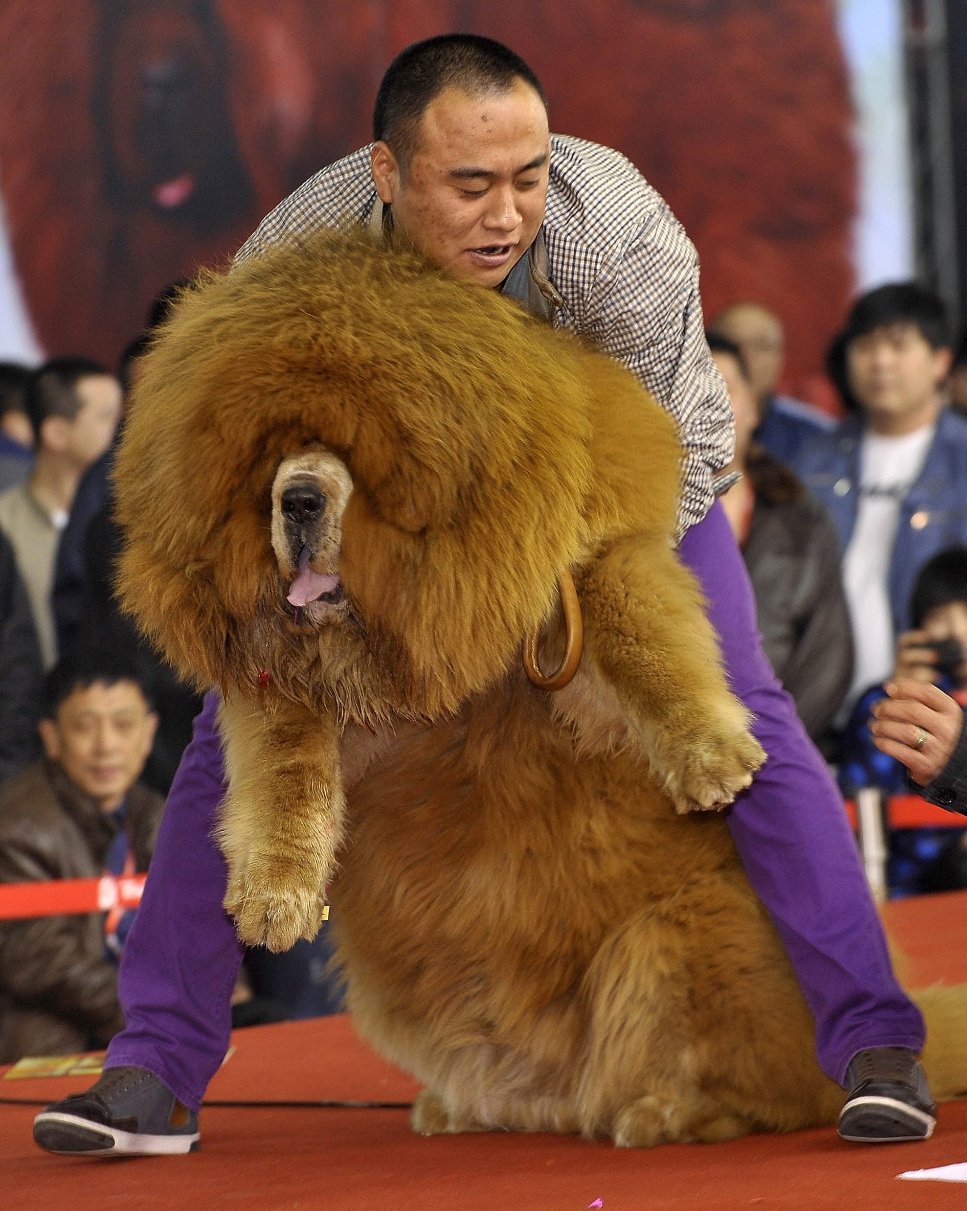 Giant Dog Breeds You Ve Probably Never Even Heard Of