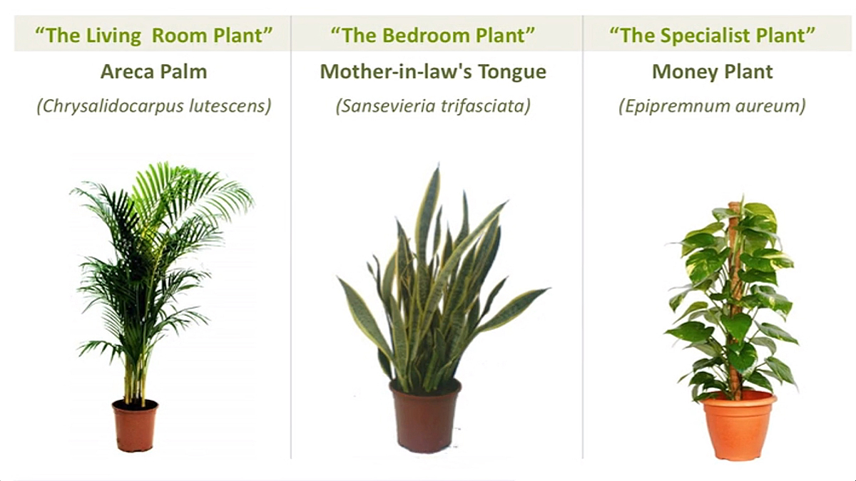 Beating hong kong 39 s bad air the best ways to defend your lungs from air pollution post - Popular indoor plants ...