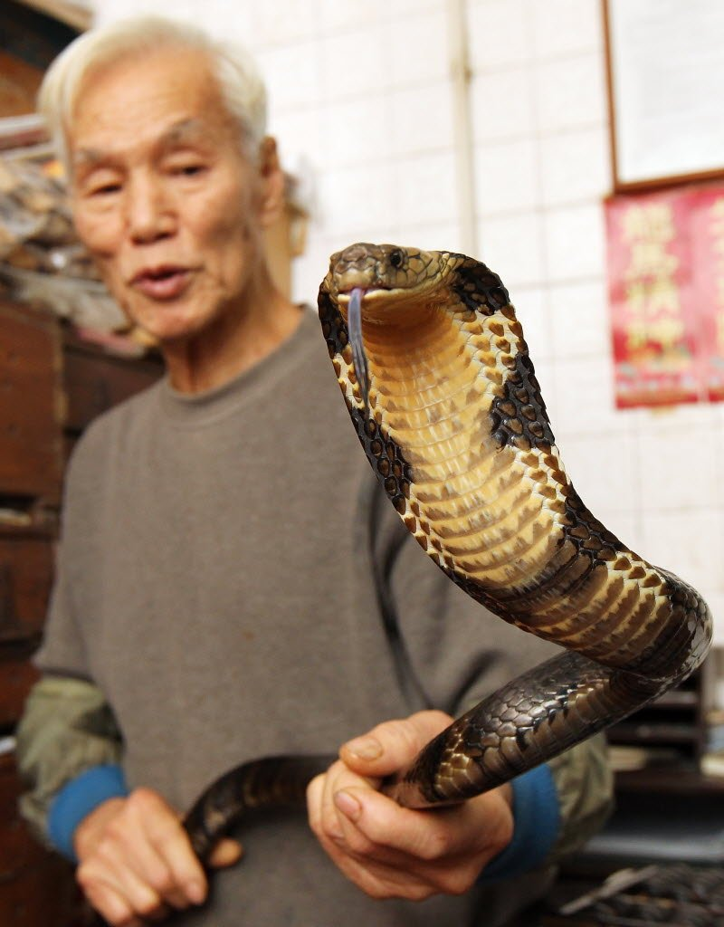 Cobras, pythons and water snakes are among the species used to make snake soup.