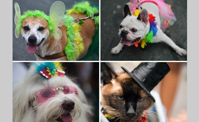 Αποκριάτικο πάρτι για σκύλους στο Ρίο...