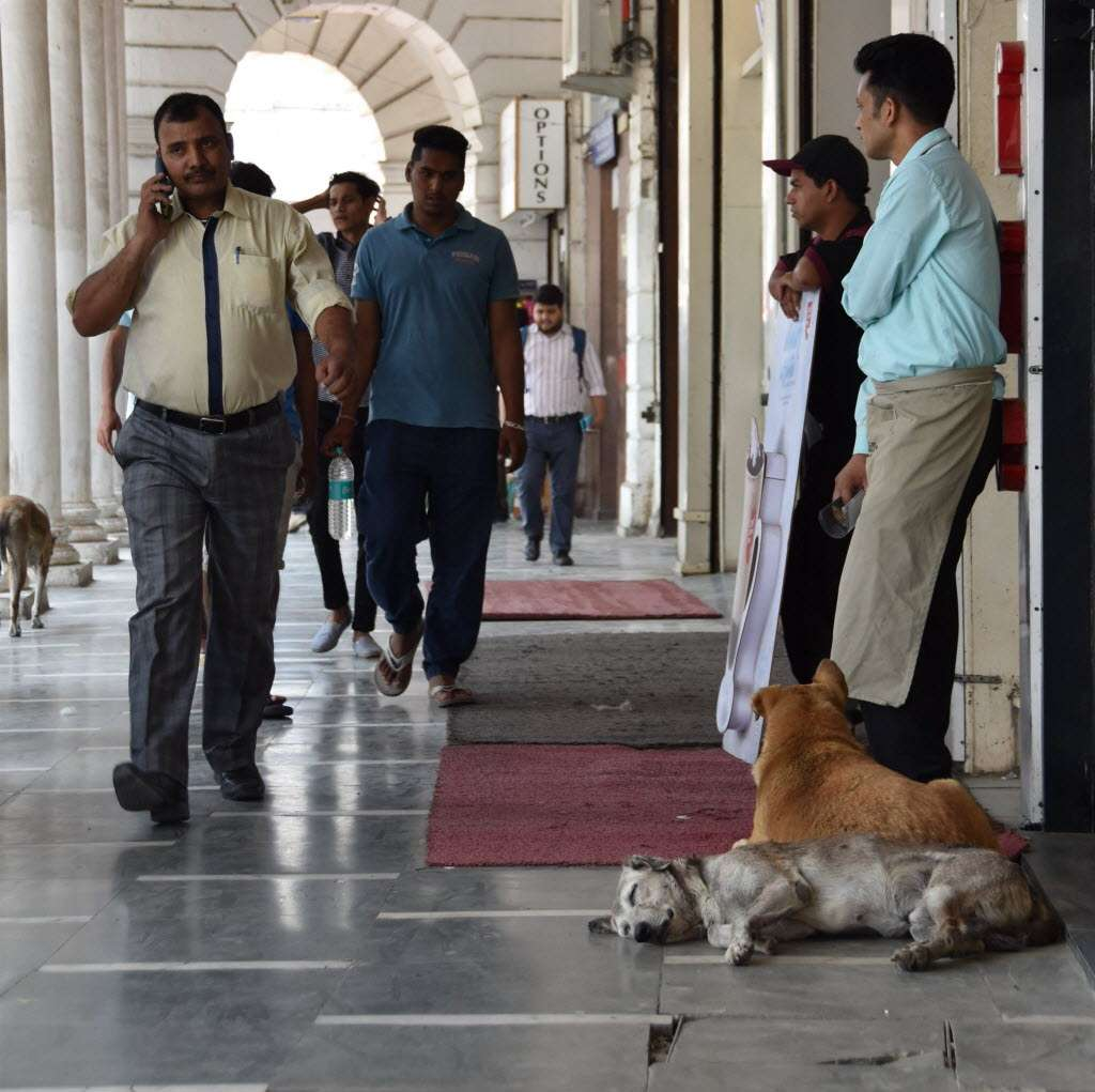 cruelty against stray animals on the rise in amid lack of the