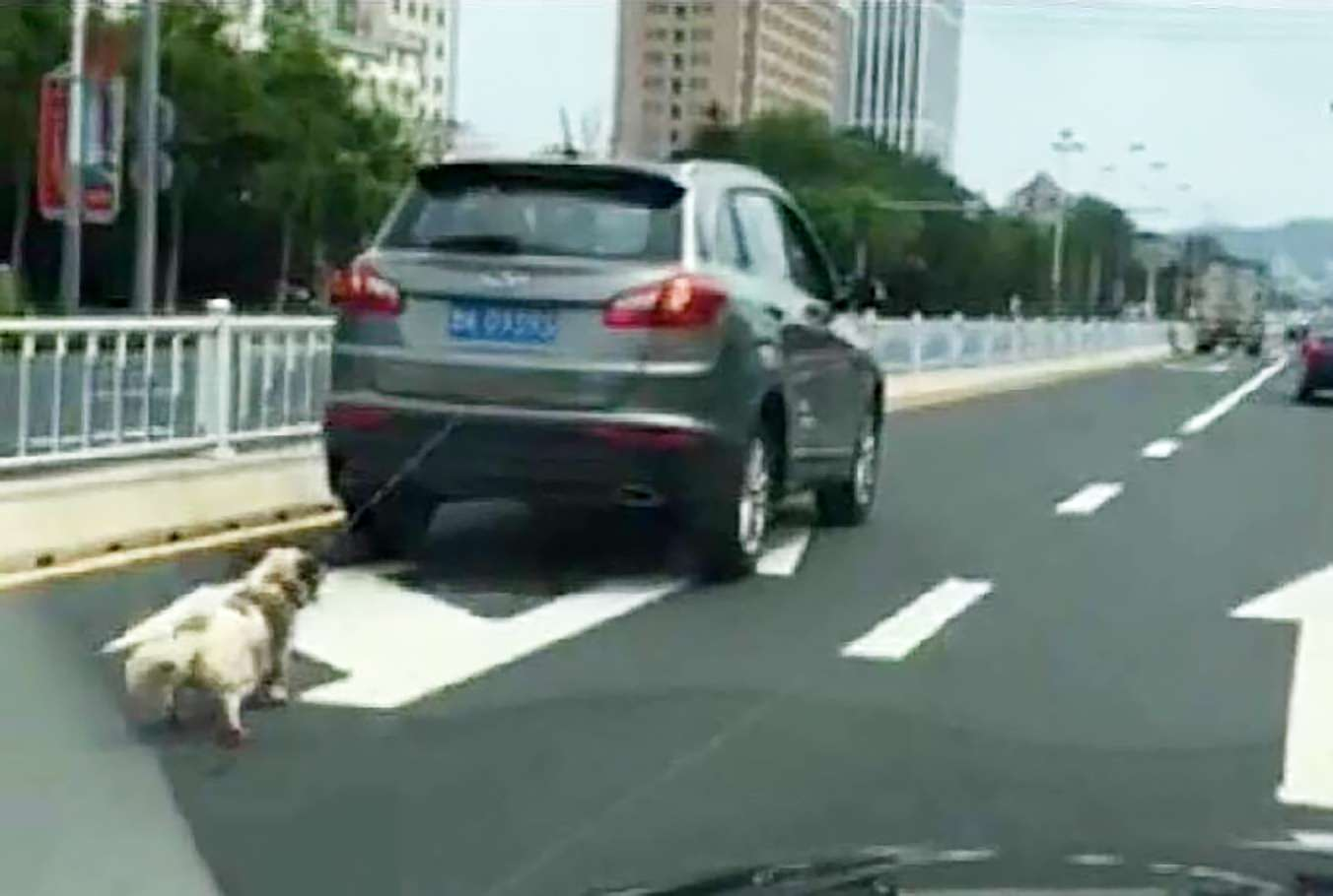 Man who dragged dog to behind car detained by police for ...