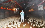 Bird flu fears - Health workers disinfect a poultry farm in Miyazaki prefecture on Japan's southern island of Kyushu. The government yesterday ordered the slaughter of some 42,000 chickens after officials confirmed a bird flu outbreak at a farm in the area. It is the second time in a month that the H5 strain of bird flu has been confirmed at a poultry farm in the prefecture. Two weeks ago, the H5N8 virus was discovered at a farm in the city of Nobeoka. About 4,000 chickens were culled in that case. Officials are uncertain whether the two outbreaks are linked. Photo: AFP