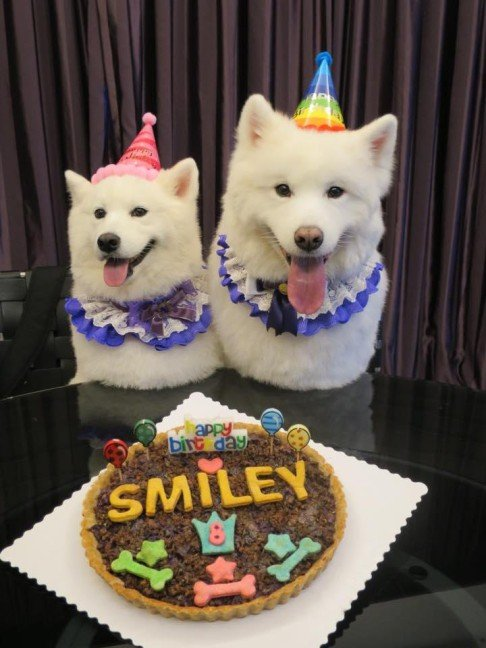 Pamper Your Pooch On Its Birthday Post Magazine South China