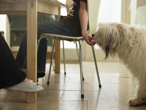 Pets: midnight trip to the vet or can it wait? | South China