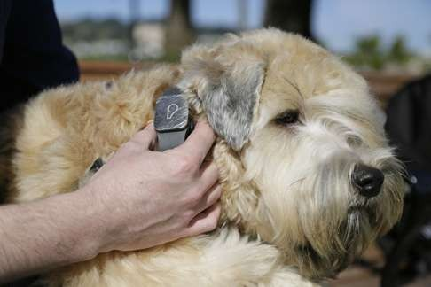 Pet tech: smart gadgets offer new ways to keep animals safe and
