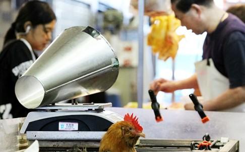 hk_bird_flu.jpg