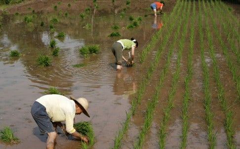 sr_china_agriculture_4948101.jpg
