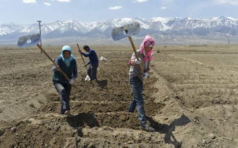 Uygur farmers prepare potato beds in Xinjiang province. Photo: Reuters
