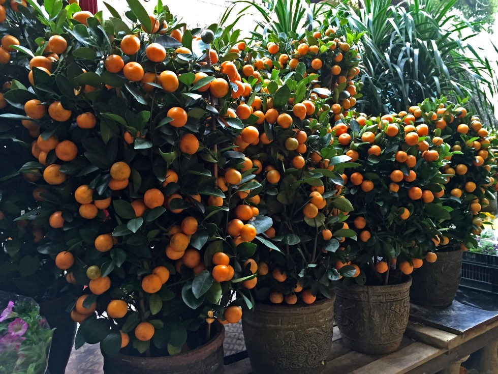 How orchids and tangerine trees are an enduring tradition of Lunar ...